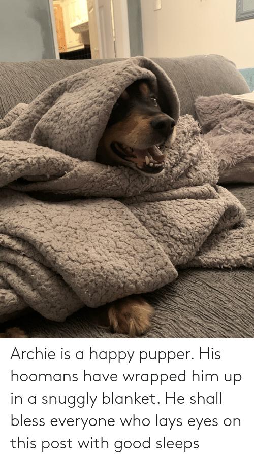 Lay's, Good, and Happy: Archie is a happy pupper. His hoomans have wrapped him up in a snuggly blanket. He shall bless everyone who lays eyes on this post with good sleeps