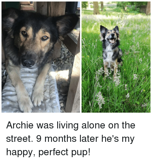 Being Alone, Happy, and Living: Archie was living alone on the street. 9 months later he's my happy, perfect pup!