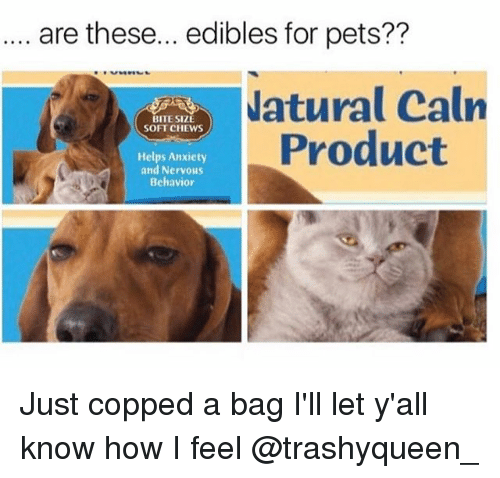 Memes, Anxiety, and Pets: are these... edibles for pets??  atural Calrn  Product  BITE SIZE  SOFT CHEWS  Helps Anxiety  and Nervous  Behavior Just copped a bag I'll let y'all know how I feel @trashyqueen_