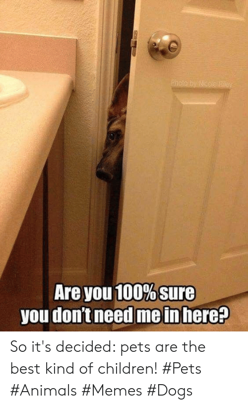 Animals, Children, and Dogs: Are you 100% sure  you don't need me in here? So it's decided: pets are the best kind of children! #Pets #Animals #Memes #Dogs