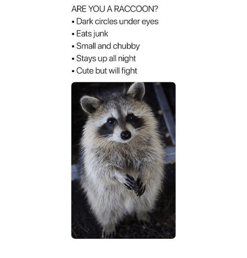 Cute, Raccoon, and Circles: ARE YOU A RACCOON?  .Dark circles under eyes  .Eats junk  .Small and chubby  .Stays up all night  . Cute but will fight