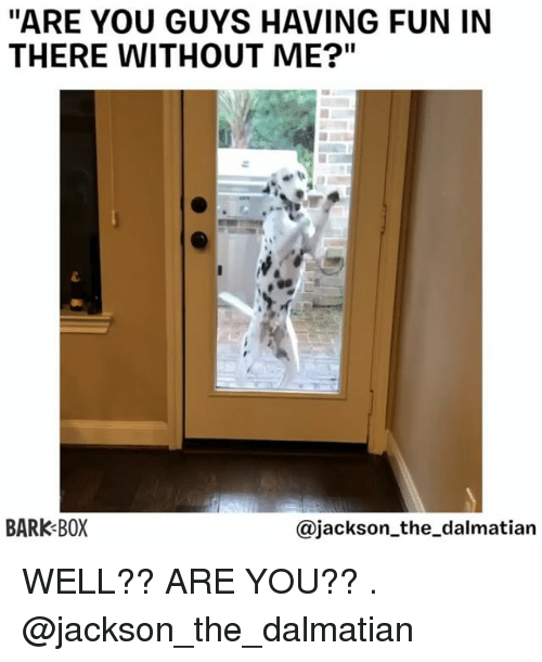 "Memes, 🤖, and Fun: ""ARE YOU GUYS HAVING FUN IN  THERE WITHOUT ME?""  BARK BOX  @jackson_the_dalmatian WELL?? ARE YOU?? . @jackson_the_dalmatian"