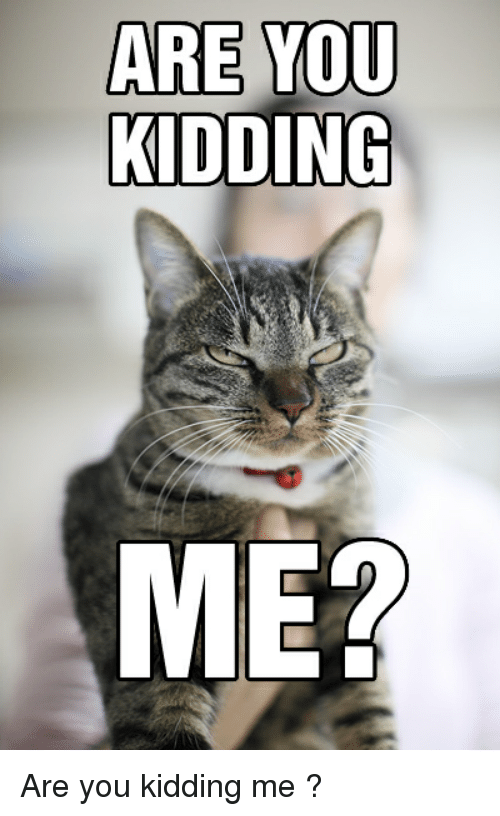 are you kidding me are you kidding me lolcats meme on me me