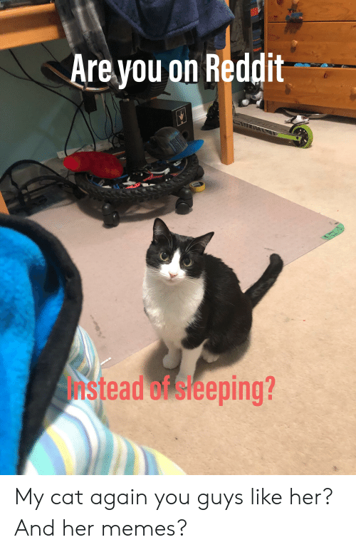 Funny, Memes, and Reddit: Are you on Reddit  Instead of sleeping? My cat again you guys like her? And her memes?