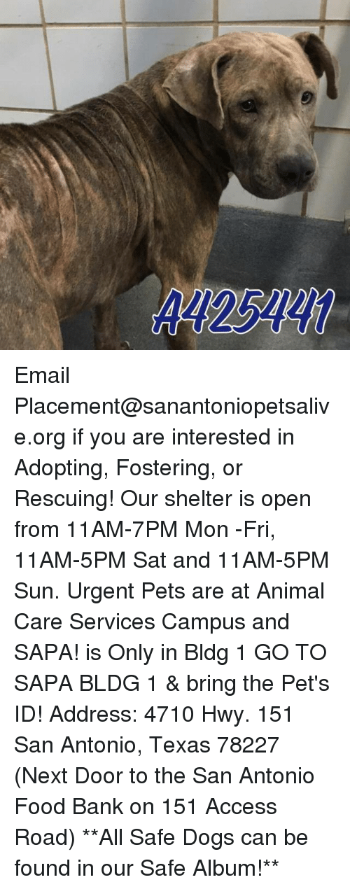 Memes, 🤖, and Sun: ARI 25MZKI Email Placement@sanantoniopetsalive.org if you are interested in Adopting, Fostering, or Rescuing!  Our shelter is open from 11AM-7PM Mon -Fri, 11AM-5PM Sat and 11AM-5PM Sun.  Urgent Pets are at Animal Care Services Campus and SAPA! is Only in Bldg 1 GO TO SAPA BLDG 1 & bring the Pet's ID! Address: 4710 Hwy. 151 San Antonio, Texas 78227 (Next Door to the San Antonio Food Bank on 151 Access Road)  **All Safe Dogs can be found in our Safe Album!**