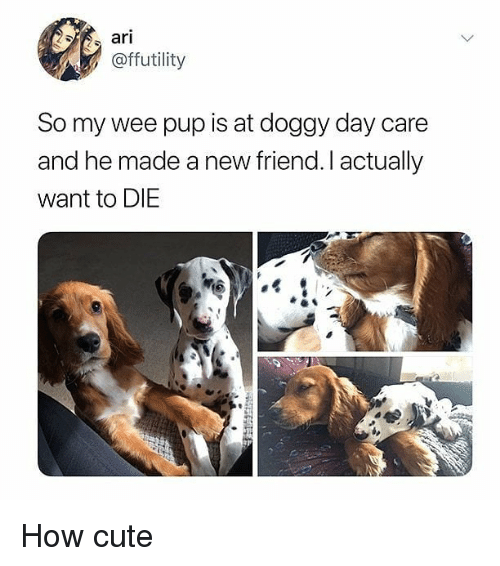 Cute, Memes, and Wee: ari  @ffutility  So my wee pup is at doggy day care  and he made a new friend. I actually  want to DIE How cute
