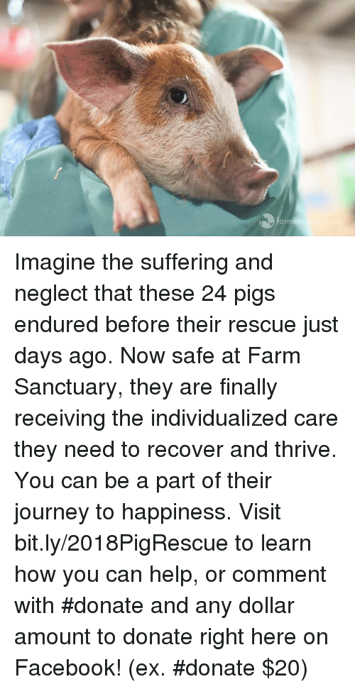 Facebook, Journey, and Memes: arm Imagine the suffering and neglect that these 24 pigs endured before their rescue just days ago. Now safe at Farm Sanctuary, they are finally receiving the individualized care they need to recover and thrive. You can be a part of their journey to happiness.   Visit bit.ly/2018PigRescue to learn how you can help, or comment with #donate and any dollar amount to donate right here on Facebook! (ex. #donate $20)