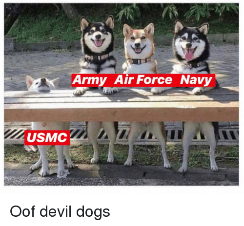 Dogs, Memes, and Devil: Army Air Force Navy  USMC Oof devil dogs