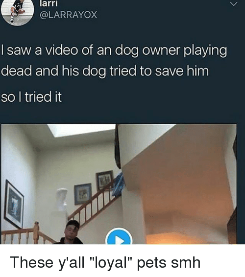 """Memes, Saw, and Smh: arri  @LARRAYOX  I saw a video of an dog owner playing  dead and his dog tried to save him  so l tried it These y'all """"loyal"""" pets smh"""
