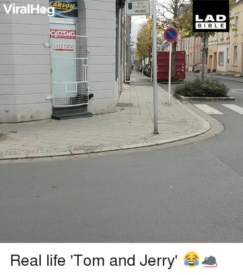 Life, Memes, and Bible: ARSO  RUE  VICTOR  HUGO  LAD  BIBLE Real life 'Tom and Jerry' 😂🐀