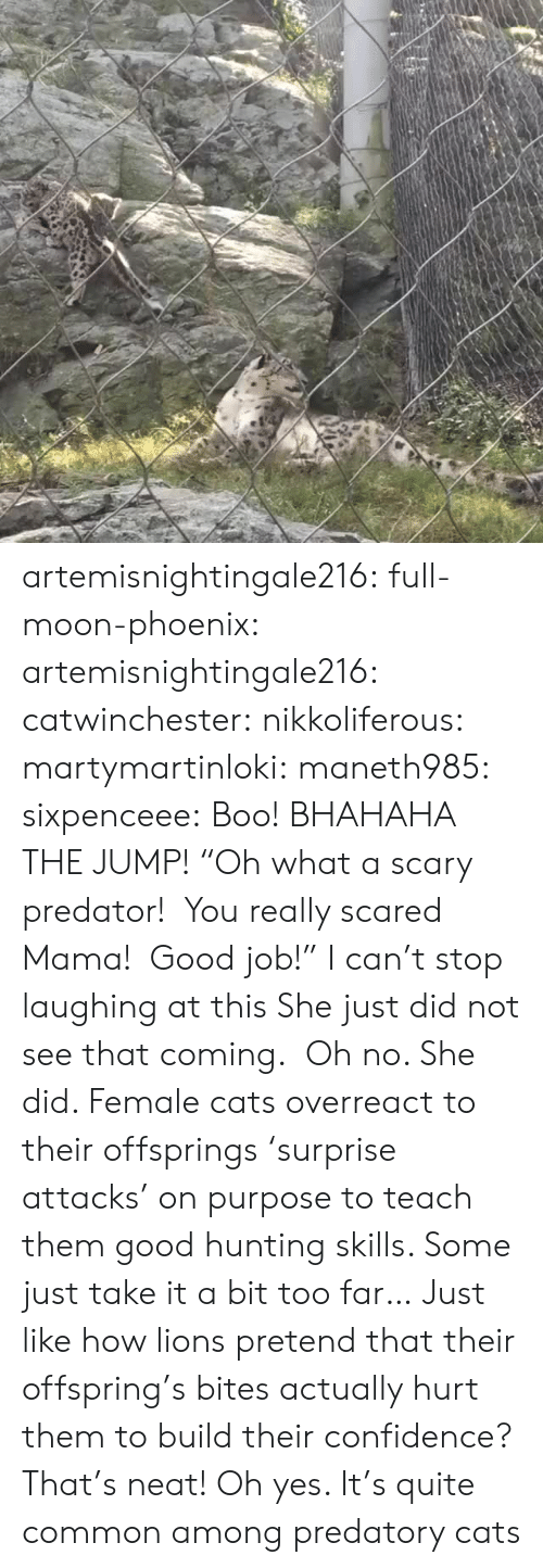"Boo, Cats, and Confidence: artemisnightingale216: full-moon-phoenix:   artemisnightingale216:   catwinchester:   nikkoliferous:  martymartinloki:  maneth985:  sixpenceee: Boo! BHAHAHA THE JUMP!  ""Oh what a scary predator!  You really scared Mama!  Good job!""   I can't stop laughing at this  She just did not see that coming.    Oh no. She did. Female cats overreact to their offsprings 'surprise attacks' on purpose to teach them good hunting skills. Some just take it a bit too far…   Just like how lions pretend that their offspring's bites actually hurt them to build their confidence? That's neat!   Oh yes. It's quite common among predatory cats"