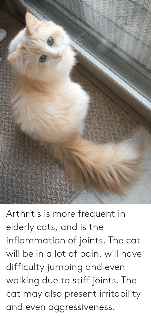 Cats, Memes, and Arthritis: Arthritis is more frequent in elderly cats, and is the inflammation of joints. The cat will be in a lot of pain, will have difficulty jumping and even walking due to stiff joints. The cat may also present irritability and even aggressiveness.