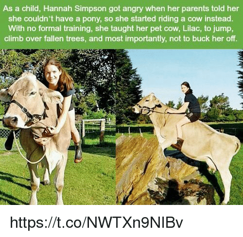 Parents, Trees, and Angry: As a child, Hannah Simpson got angry when her parents told her  she couldn't have a pony, so she started riding a cow instead  With no formal training, she taught her pet cow, Lilac, to jump,  climb over fallen trees, and most importantly, not to buck her off https://t.co/NWTXn9NIBv