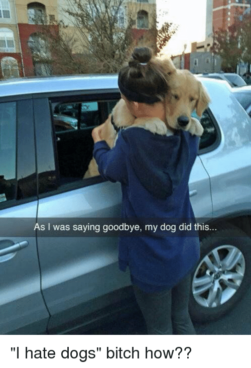 """Relatable, Hate, and Hateful: As I was saying goodbye, my dog did this.. """"I hate dogs"""" bitch how??"""