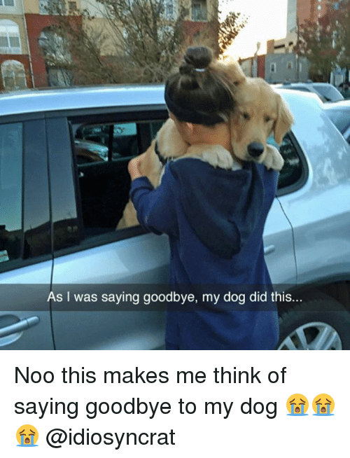 as i was saying goodbye my dog did this noo 26586377 ✅ 25 best memes about saying goodbye saying goodbye memes