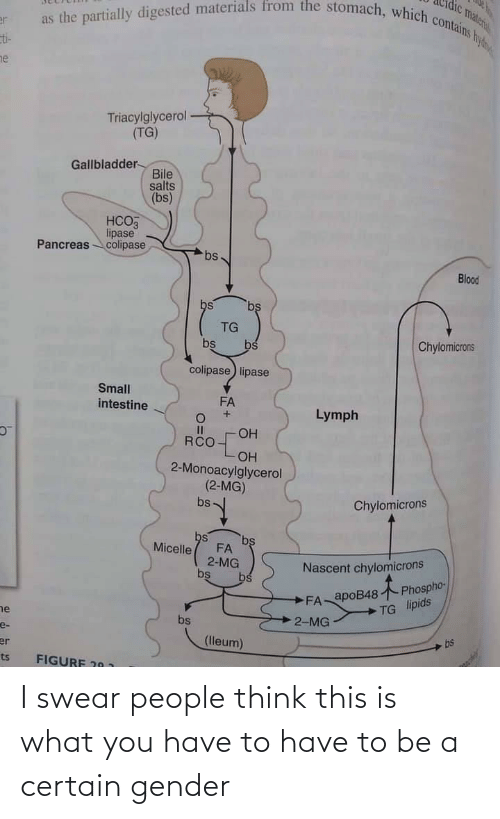 Gender, Blood, and Gallbladder: as the partially digested materials from the stomach, which contains hy  vateri  er  ti-  ne  Triacylglycerol  (TG)  Gallbladder-  Bile  salts  (bs)  НСОЗ  lipase  Pancreascolipase  bs  Blood  bs  bs  TG  Chylomicrons  bs  bs  colipase lipase  Small  FA  intestine  Lymph  OH  RCO  ОН  2-Monoacylglycerol  (2-MG)  Chylomicrons  bs  bs  bs  FA  2-MG  bs  Micelle  Nascent chylomicrons  bs  FA apoB48 Phospho-  TG lipids  ne  2-MG  bs  e-  bs  (lleum)  er  ts  FIGURE 20 1 I swear people think this is what you have to have to be a certain gender