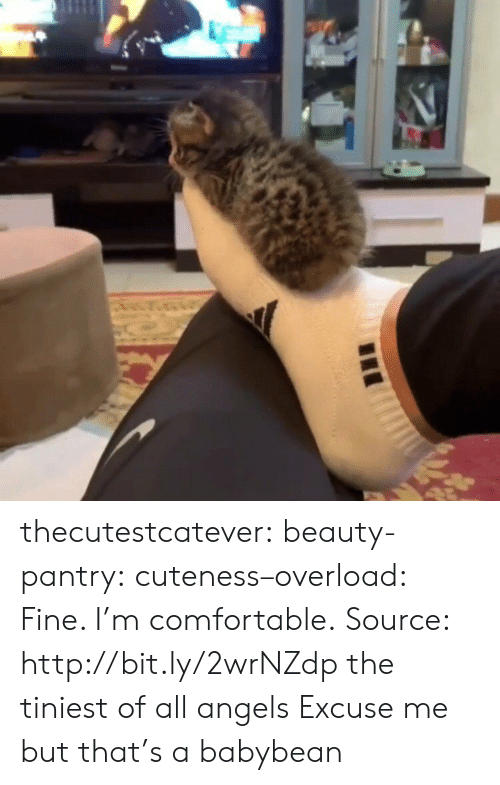 Comfortable, Tumblr, and Angels: AS thecutestcatever: beauty-pantry:   cuteness–overload:  Fine. I'm comfortable. Source: http://bit.ly/2wrNZdp  the tiniest of all angels   Excuse me but that's a babybean