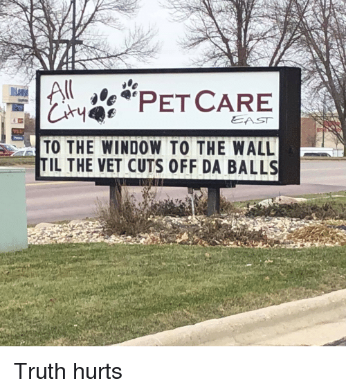 As To The Window To The Wall Til The Vet Cuts Off Da Balls Truth