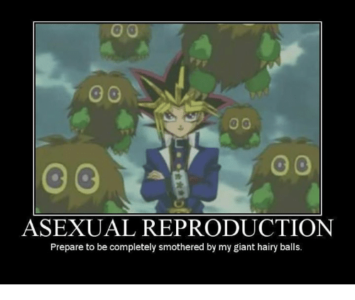 Asexual reproduction meme creator