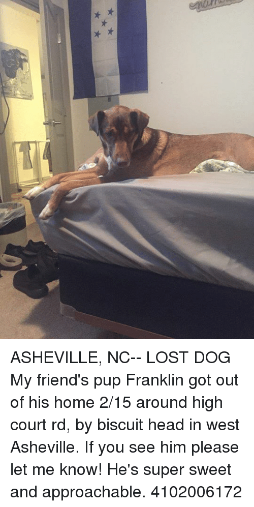 08dcfa3f1b60 ASHEVILLE NC-- LOST DOG My Friend s Pup Franklin Got Out of His Home ...