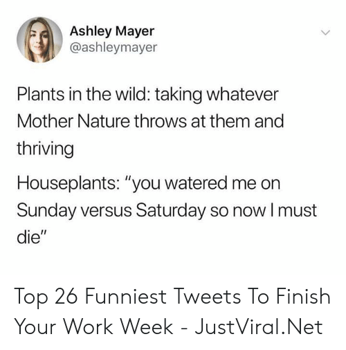 """Work, Nature, and Wild: Ashley Mayer  @ashleymayer  Plants in the wild: taking whatever  Mother Nature throws at them and  thriving  Houseplants: """"you watered me on  Sunday versus Saturday so nowI must  die"""" Top 26 Funniest Tweets To Finish Your Work Week - JustViral.Net"""