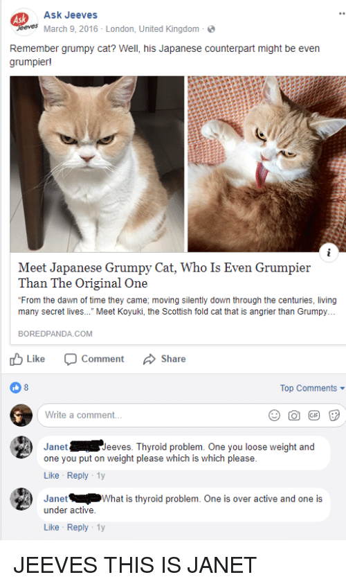 Best Memes About Grumpy Cat Grumpy Cat Memes - Meet the japanese cat that might just be the grumpiest kitty ever