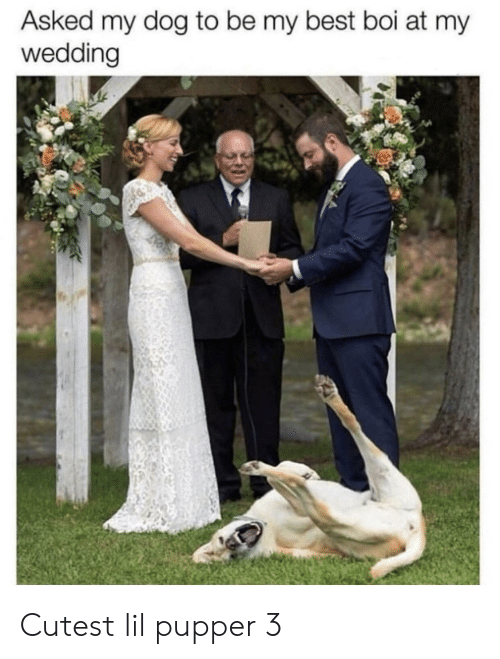 Best, Wedding, and Boi: Asked my dog to be my best boi at my  wedding Cutest lil pupper 3