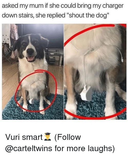 """Memes, 🤖, and Dog: asked my mum if she could bring my charger  down stairs, she replied""""shout the dog"""" Vuri smart👨🎓 (Follow @carteltwins for more laughs)"""