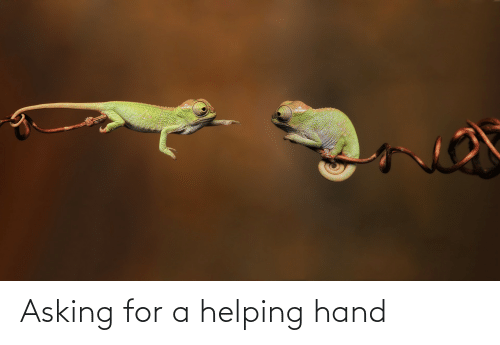 Asking, For, and Hand: Asking for a helping hand