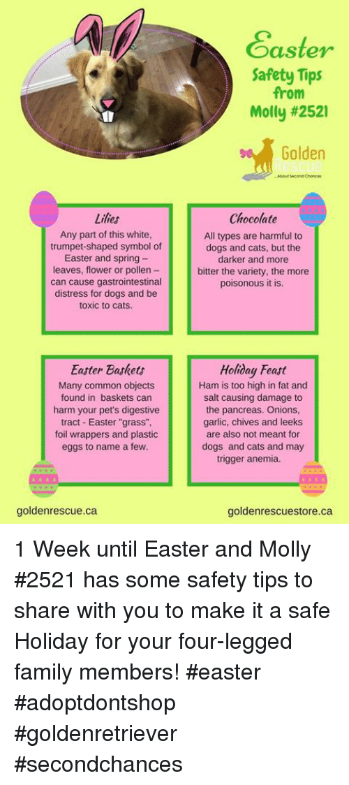 """Cats, Dogs, and Easter: asteY  Safety Tips  from  Molly #2521  Golden  Abou Second Chonces  Lilies  Any part of this white  trumpet-shaped symbol of  Easter and spring -  leaves, flower or pollen -  can cause gastrointestinal  distress for dogs and be  toxic to cats  Chocolate  All types are harmful to  dogs and cats, but the  darker and more  bitter the variety, the more  poisonous it is.  Easter Baskets  Many common objects  found in baskets can  harm your pet's digestive  tract Easter """"grass"""",  foil wrappers and plastic  eggs to name a few  Holiday Feast  Ham is too high in fat and  salt causing damage to  the pancreas. Onions  garlic, chives and leeks  are also not meant for  dogs and cats and may  trigger anemia.  goldenrescue.ca  goldenrescuestore.ca 1 Week until Easter and Molly #2521 has some safety tips to share with you to make it a safe Holiday for your four-legged family members! #easter #adoptdontshop #goldenretriever #secondchances"""