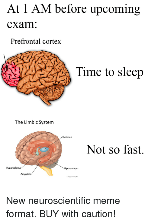 At 1 AM Before Upcoming Exam Prefrontal Cortex Time to Sleep the ...