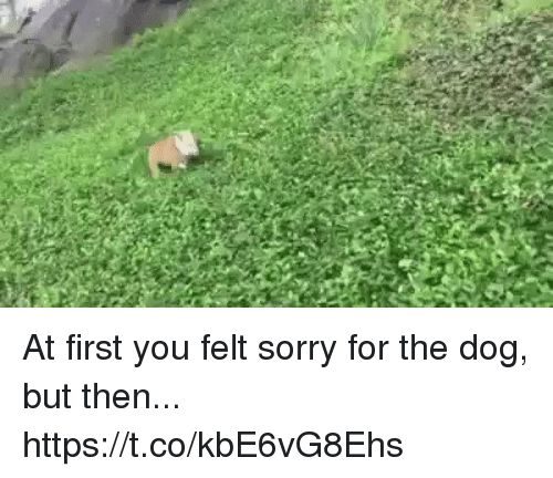 Sorry, Girl Memes, and Dog: At first you felt sorry for the dog, but then...  https://t.co/kbE6vG8Ehs