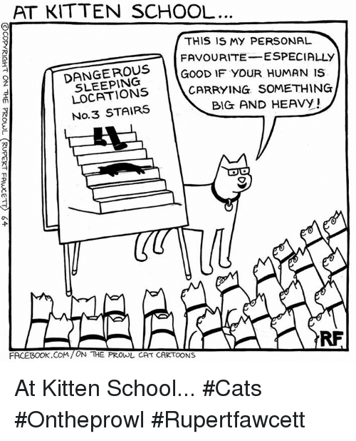 At Kitten School This Is My Personal Favourite Especially Good If