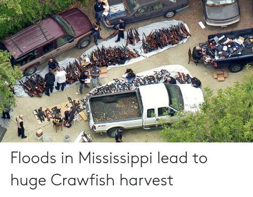 Mississippi, Lead, and Crawfish: ATE Floods in Mississippi lead to huge Crawfish harvest
