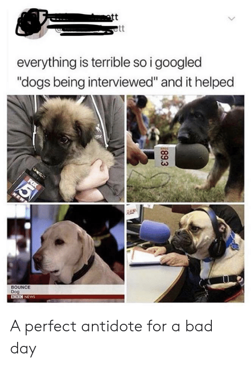 "Antidote, Bad, and Bad Day: att  ett  everything is terrible so i googled  ""dogs being interviewed"" and it helped  5  FOX  NEW  BOUNCE  Dog  DOC NEWS  89.3 A perfect antidote for a bad day"