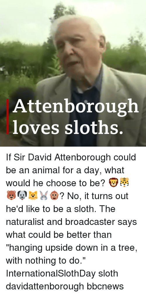 "Memes, Animal, and Sloth: Attenborough  loves sloths. If Sir David Attenborough could be an animal for a day, what would he choose to be? 🦁🐯🐻🐶🐱🐰🐵? No, it turns out he'd like to be a sloth. The naturalist and broadcaster says what could be better than ""hanging upside down in a tree, with nothing to do."" InternationalSlothDay sloth davidattenborough bbcnews"