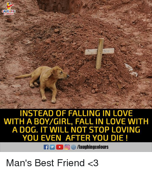 Best Friend, Fall, and Love: AUGHING  INSTEAD OF FALLING IN LOVE  WITH A BOY/GIRL, FALL IN LOVE WITH  A DOG. IT WILL NOT STOP LOVING  YOU EVEN AFTER YOU DIE! Man's Best Friend <3