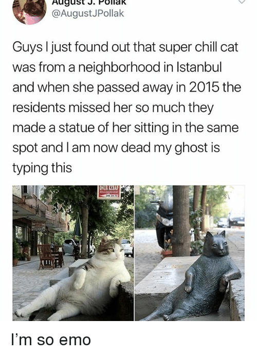 Chill, Emo, and Memes: August J. POllak  @AugustJPollak  Guys I just found out that super chill cat  was from a neighborhood in lstanbul  and when she passed away in 2015 the  residents missed her so much they  made a statue of her sitting in the same  spot and l am now dead my ghost is  typing this  4 3473 I'm so emo