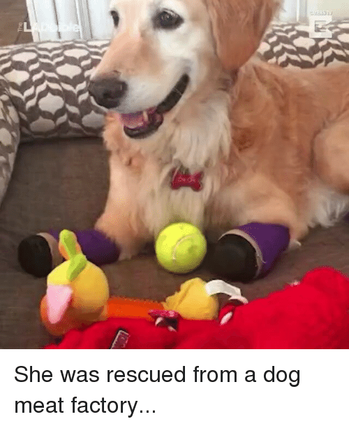 Memes, 🤖, and Meat: auL She was rescued from a dog meat factory...