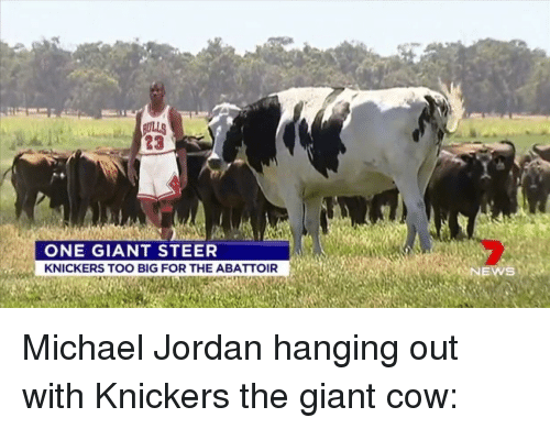 2019 original get cheap cheaper AULLS 23 ONE GIANT STEER KNICKERS TOO BIG FOR THE ABATTOIR ...