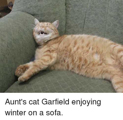 Aunt S Cat Garfield Enjoying Winter On A Sofa Winter Meme On Me Me