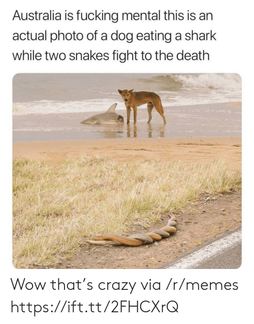 Crazy, Fucking, and Memes: Australia is fucking mental this is an  actual photo of a dog eating a shark  while two snakes fight to the death Wow that's crazy via /r/memes https://ift.tt/2FHCXrQ