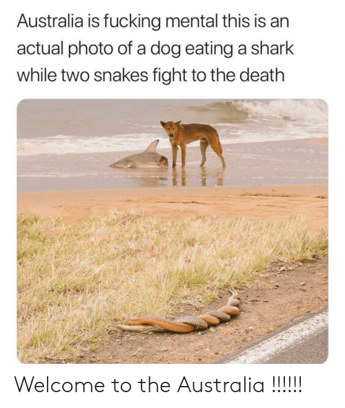 Fucking, Shark, and Australia: Australia is fucking mental this is an  actual photo of a dog eating a shark  while two snakes fight to the death Welcome to the Australia !!!!!!