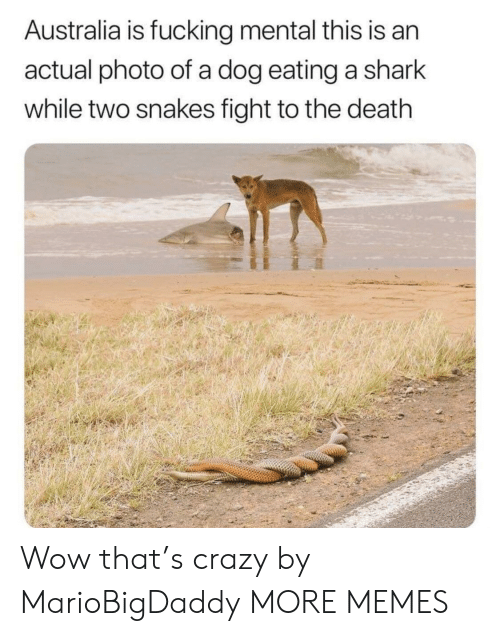 Crazy, Dank, and Fucking: Australia is fucking mental this is an  actual photo of a dog eating a shark  while two snakes fight to the death Wow that's crazy by MarioBigDaddy MORE MEMES