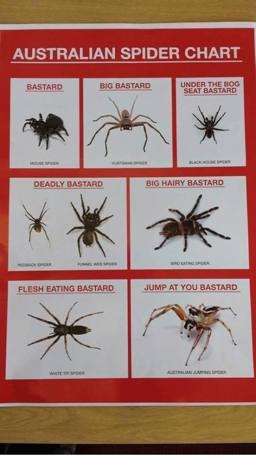 spider, black, and house: australian spider chart under the bog seat  bastard bastard