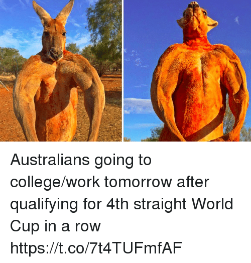 College, Memes, and Work: Australians going to college/work tomorrow after qualifying for 4th straight World Cup in a row https://t.co/7t4TUFmfAF