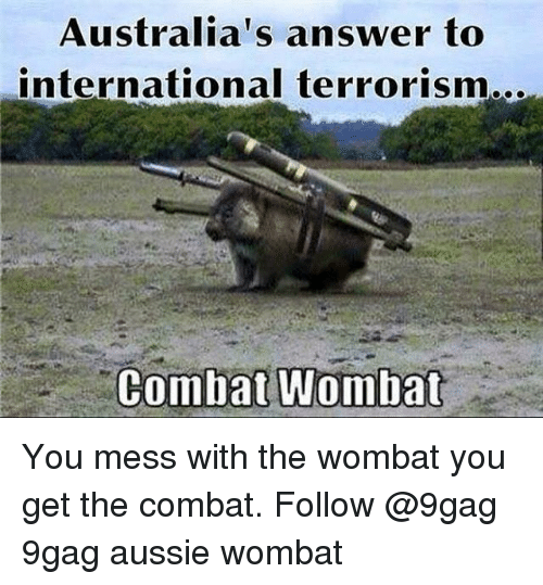 how to catch a wombat