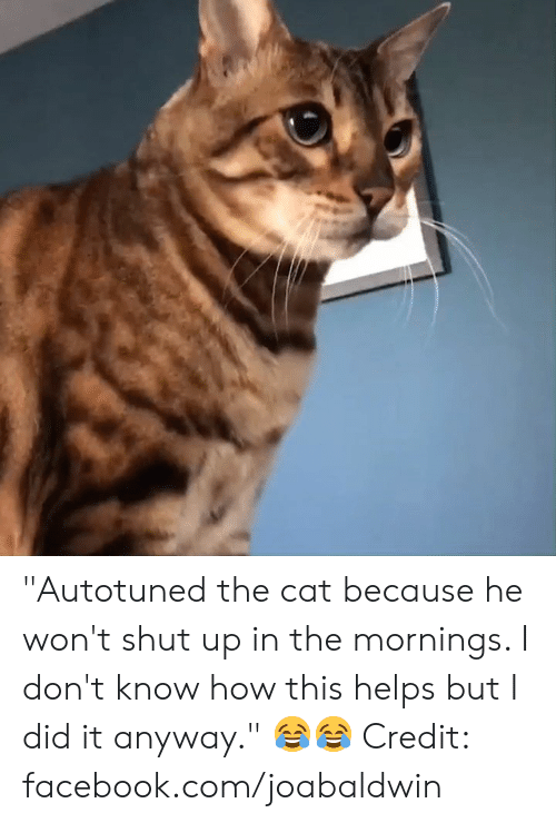 "Dank, Facebook, and Shut Up: ""Autotuned the cat because he won't shut up in the mornings. I don't know how this helps but I did it anyway."" 😂😂  Credit: facebook.com/joabaldwin"
