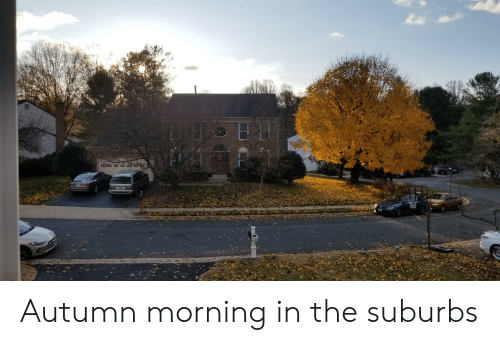 Autumn, Morning, and Suburbs: Autumn morning in the suburbs
