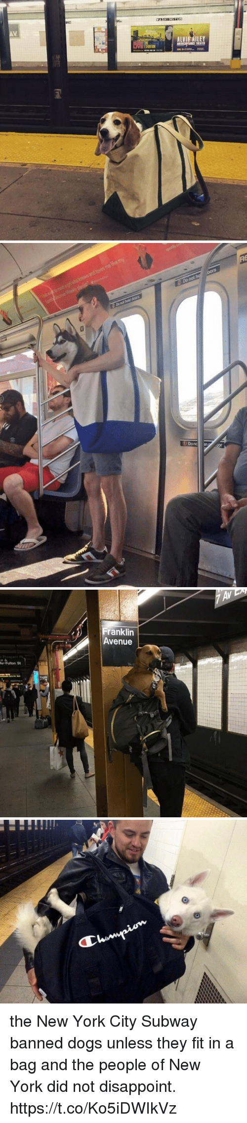 Dogs, New York, and Subway: AV  ALVI AILEY   Franklin  Avenue  Av-Fulton St the New York City Subway banned dogs unless they fit in a bag and the people of New York did not disappoint. https://t.co/Ko5iDWIkVz